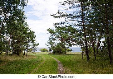 estrada, praia, árvores pinho, floresta