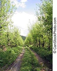 estrada rural