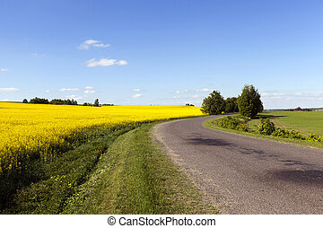 estrada, rural, canola