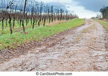estrada rural, em, vinhedo, em, pôr do sol