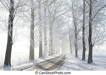 estrada rural, entre, árvores geadas