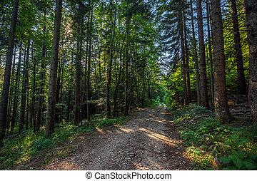 estrada sujeira, em, verão, floresta pinho