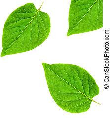 estratto verde, foglia, cornice