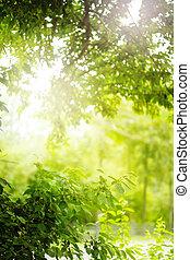 Estratto, verde, fondo, natura