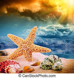 estrela, mar, coloridos, conchas