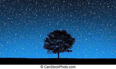 estrelas, atrás de, árvore