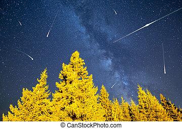 estrelas cadentes, árvores pinho, meio leitoso