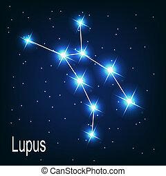 """estrella, """"lupus"""", sky., ilustración, vector, noche, constelación"""