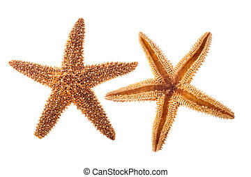 estrella, mar