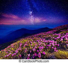 estrellado, noche, montaña