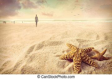 estrellas de mar, arena, en la playa