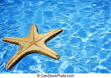estrellas de mar, en, agua azul