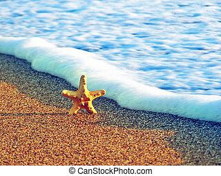 estrellas de mar, en, el, verano, playa