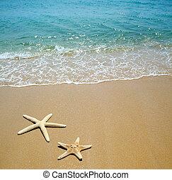estrellas de mar, en, un, arena de la playa