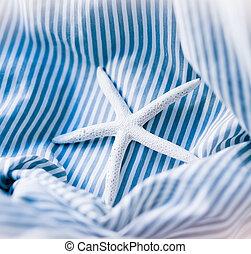 estrellas de mar, en, un, azul, fondo rayado