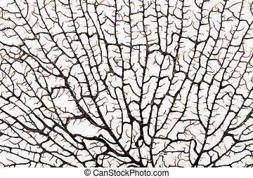 estructura, de, un, coral, similar, laberinto
