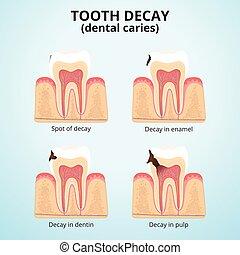 estructura, dientes humanos