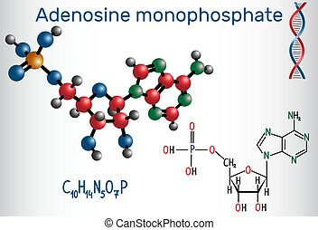 estrutural, monophosphate, molécula, rna, molécula, aquilo,...