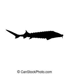 esturjão, gostosa, peixe, marisco, ilustração, vetorial, ...