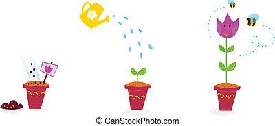 etapas, jardín, -, tulipán, crecimiento, flores