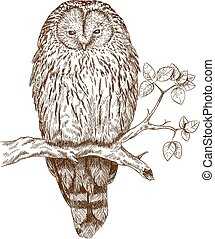 etching owl - Vector antique engraving illustration of owl...