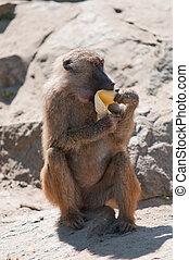 eten, aap, banaan