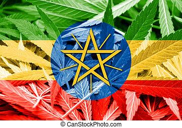 ethiopia läßt, auf, cannabis, hintergrund., droge, policy., legalization, von, marihuana