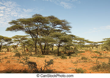 ethiopian, paisagem