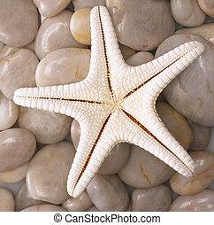 etoile mer, rochers