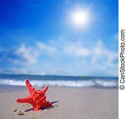 etoile mer, sur, plage tropicale