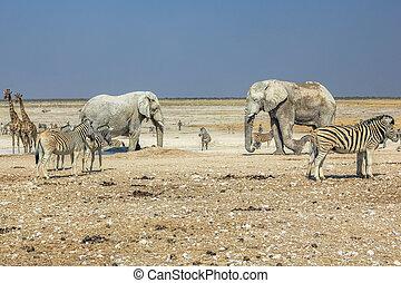 etosha, 얼룩말, 코끼리
