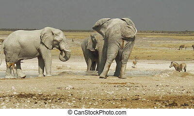Etosha zebras and elephants