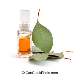 eucalipto, óleo, essencial, leaves.