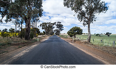 eucalipto, canola, país, direito, ao lado, árvores, campos, rural, alinhado, estrada