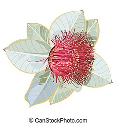 eucalipto, ilustração, frutífero, realístico, mottlecah, vetorial