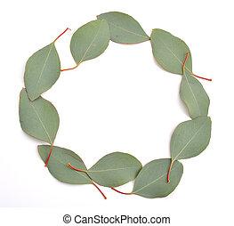 eucalipto, leaves.