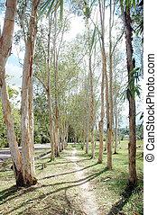 eucalipto, leucadendra), (melaleuca