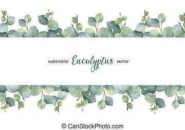 eucalipto, ramas, hojas, dólar, aislado, acuarela, fondo., vector, verde, floral, blanco, bandera, plata