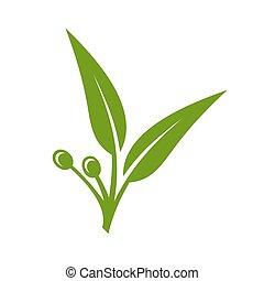 eucalipto, verde sai, ícone, branco, experiência., vetorial