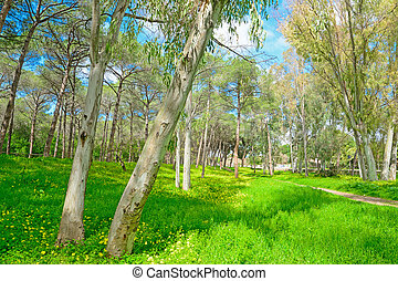 eucalyptus and pine trees in a green meadow in Alghero