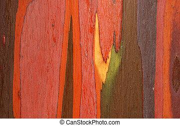 Detail of eucalyptus bark