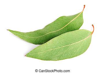 eucalyptus, bladeren