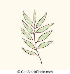 Eucalyptus, blue agonis thyme asparagus, herbal, floral -...