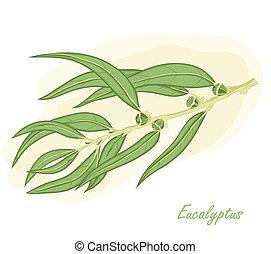 Eucalyptus branch hand drawn vector illustration.