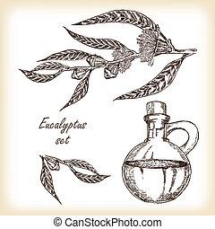 Eucalyptus branch with glass jar hand drawn vector illustration