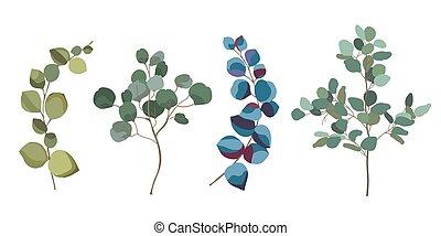 eucalyptus, branches, collection