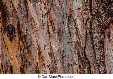 eucalyptus, coloré, modèle, résumé, arbre, haut, texture, fin, rayé