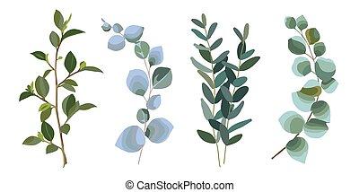 eucalyptus, ensemble, branches