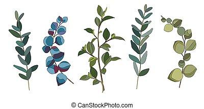 eucalyptus, feuilles, ensemble
