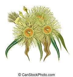 eucalyptus, fleurs, jaune, tas